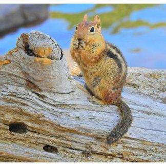 Chipmunks, Squirrels