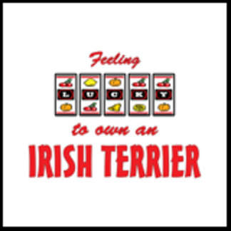 Feeling Lucky to Own an Irish Terrier