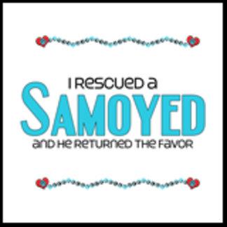 I Rescued a Samoyed (Male Dog)