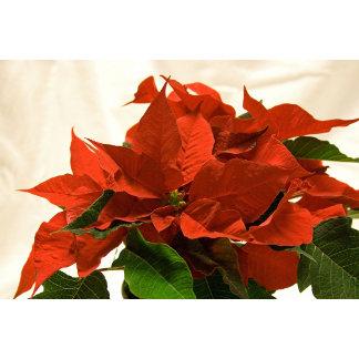 Christmas Floral