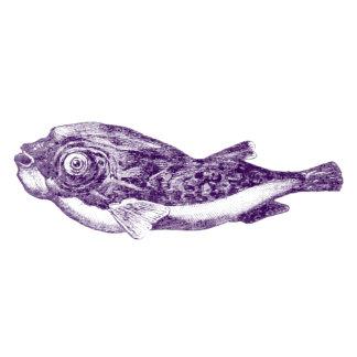 Tetraodon (Puffer)