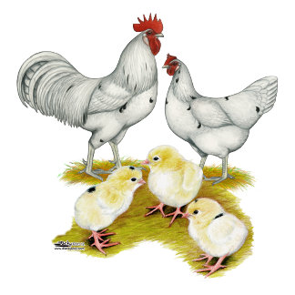 Austra White Family