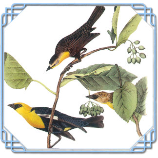 Audubons Wildlife