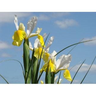 IRISES IRIS FLOWERS