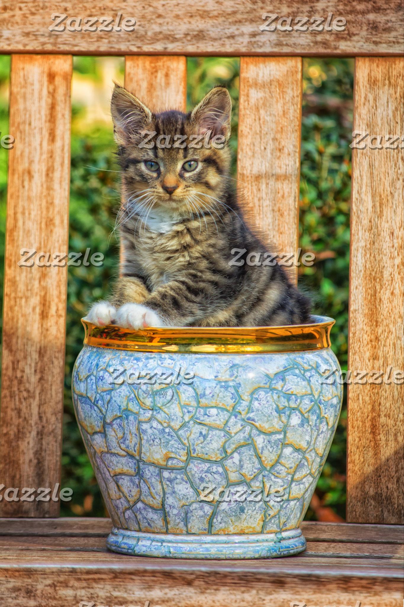 Pot Of Baby Kitten