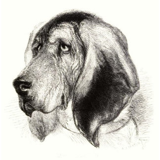 Vintage Bloodhound art