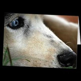 * Huskies