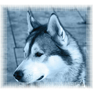 Alaskan Malamute Dog