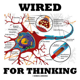 Wired For Thinking (Neuron / Synapse)