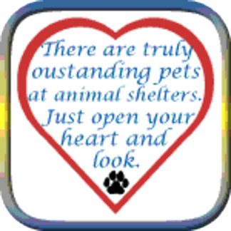 Outstanding Pets