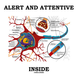 Alert And Attentive Inside Neuron Synapse Humor