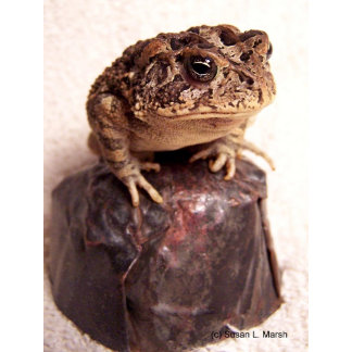 Toad frog sitting on hand hammered copper cup pic