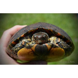 Ornate wood turtle in hand