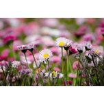 flowers-1368276991Qeh.jpg