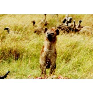 * Hyena