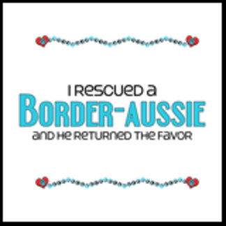 I Rescued a Border-Aussie (Male Dog)