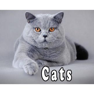 _1_Cats