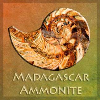 Madagascar Ammonites