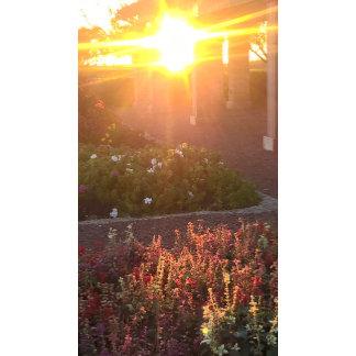 Sun Rises Over Flowers