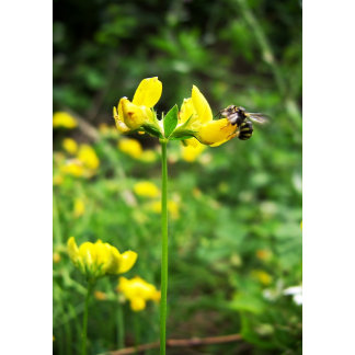 Yellow Flower and Wasp
