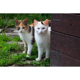 Cats Adventure
