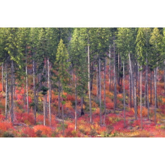 Autumn colors of forests in The Cascade 5