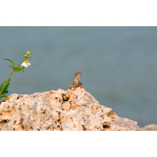brown anole on holey rock with flower lizard