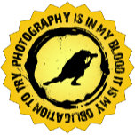 Photography Yellow Insignia.png