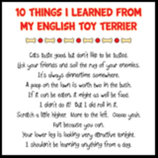Things I Learned From My English Toy Terrier Joke