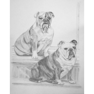 Levi & Bella, English Bulldogs