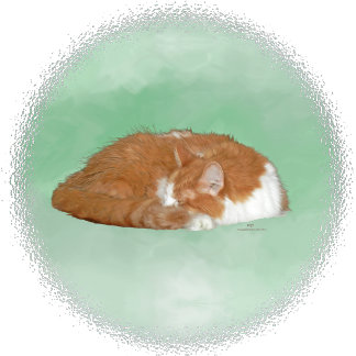 Orange Longhair Kitty