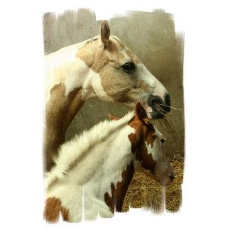 Paint Horse Pair