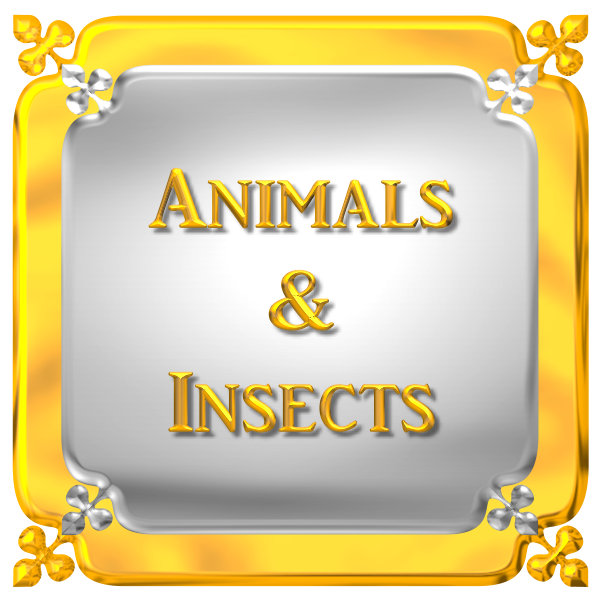 ANIMALS & INSECTS