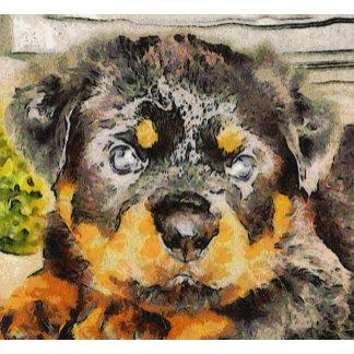 Rottweiler Puppy Portrait