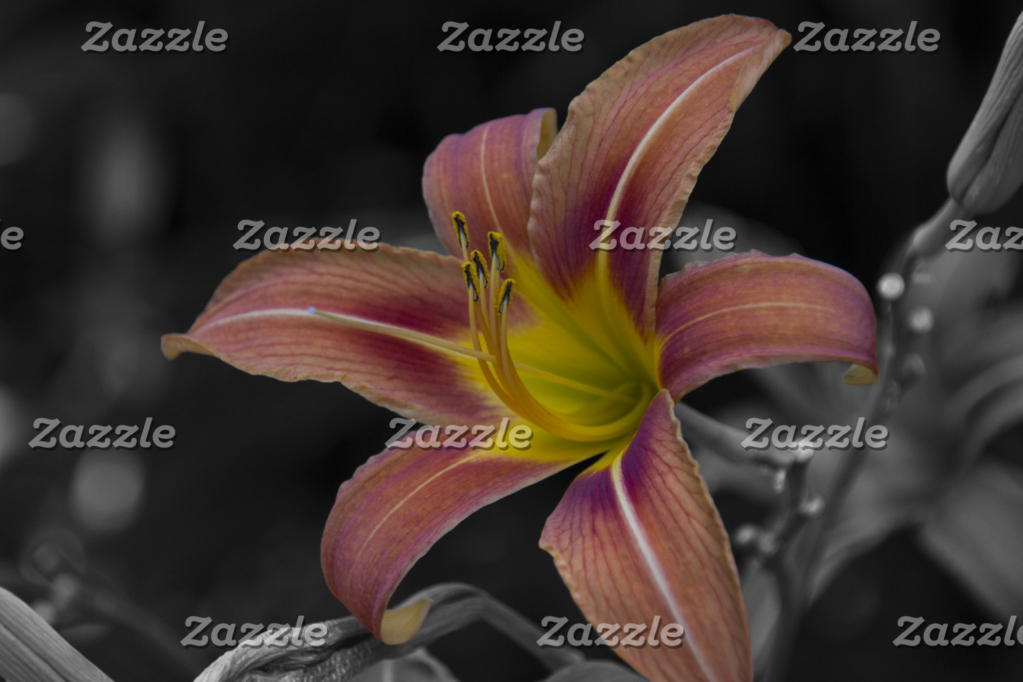 Daylily Color Burst