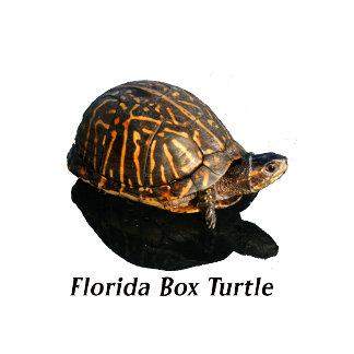 Florida Box turtle Photograph w Text