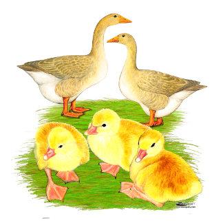 Buff Goose Family