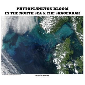 Phytoplankton Bloom In North Sea & The Skagerrak