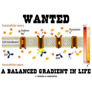 Wanted A Balanced Gradient In Life (Cell Biology)