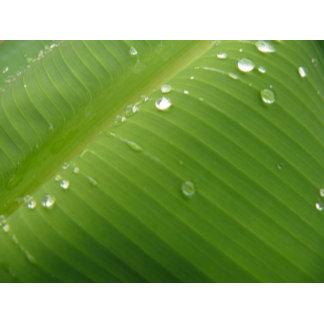 Dewey Banana Leaf 2