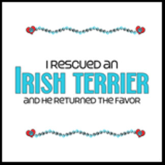 I Rescued an Irish Terrier (Male Dog)
