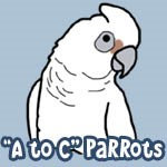 Parrot Species A to C