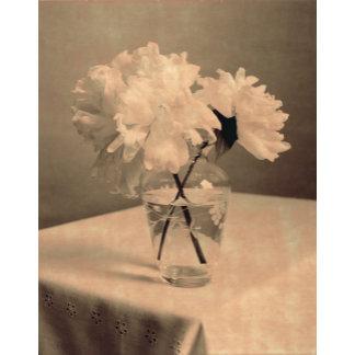 Vintage Flower Photo
