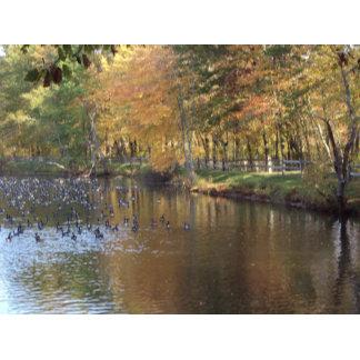 Fall Autumn Geese