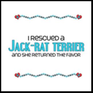 I Rescued a Jack-Rat Terrier (Female Dog)
