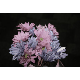 daisy bouquet faded flower plant image