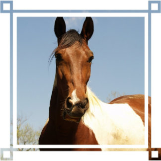 Sweet Paint Horse