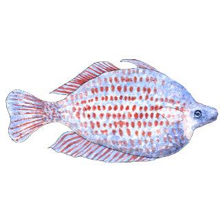 Red Line Rainbowfish. Fish Watercolor Painting.