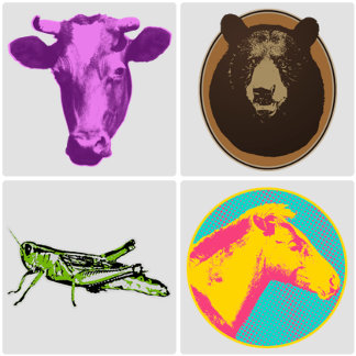 ➤ Animals and Insects