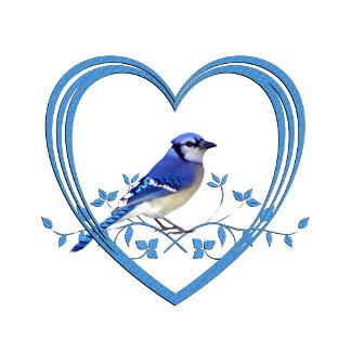 Blue Jay in Heart